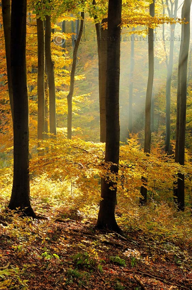 jesen_zima_jar_v_bucine1