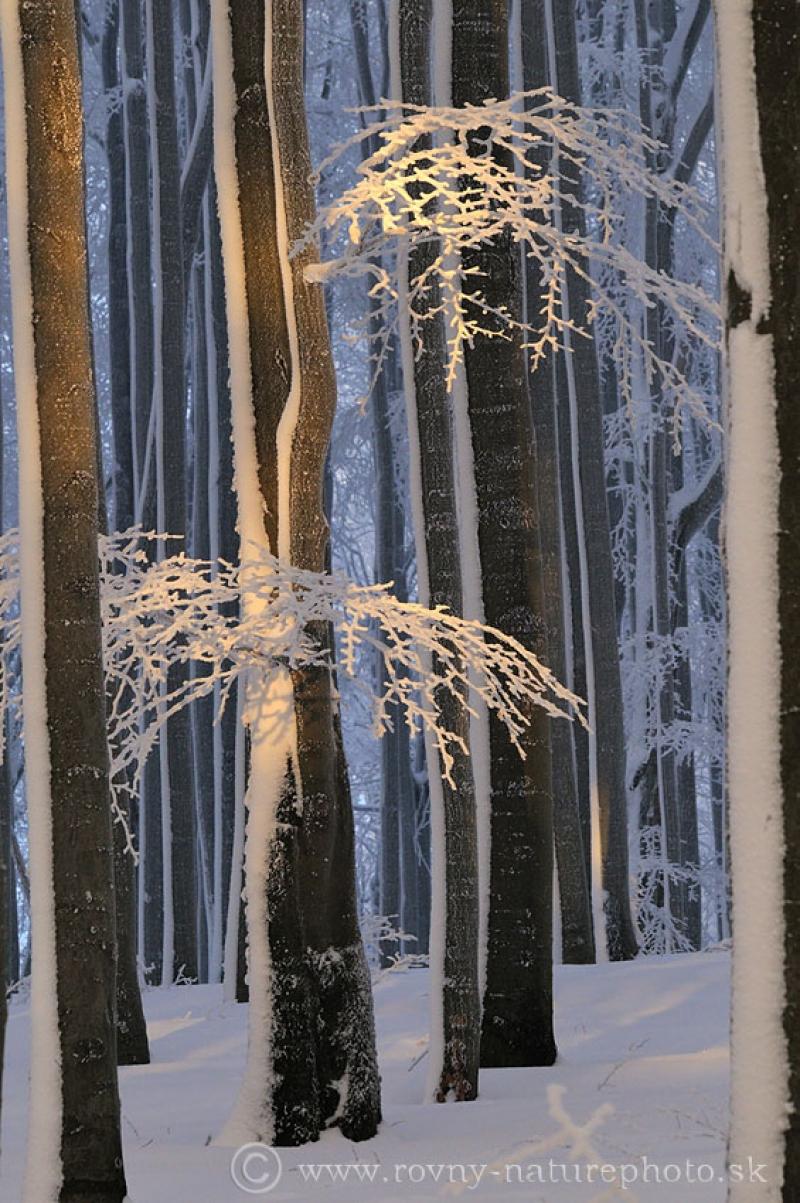 jesen_zima_jar_v_bucine3