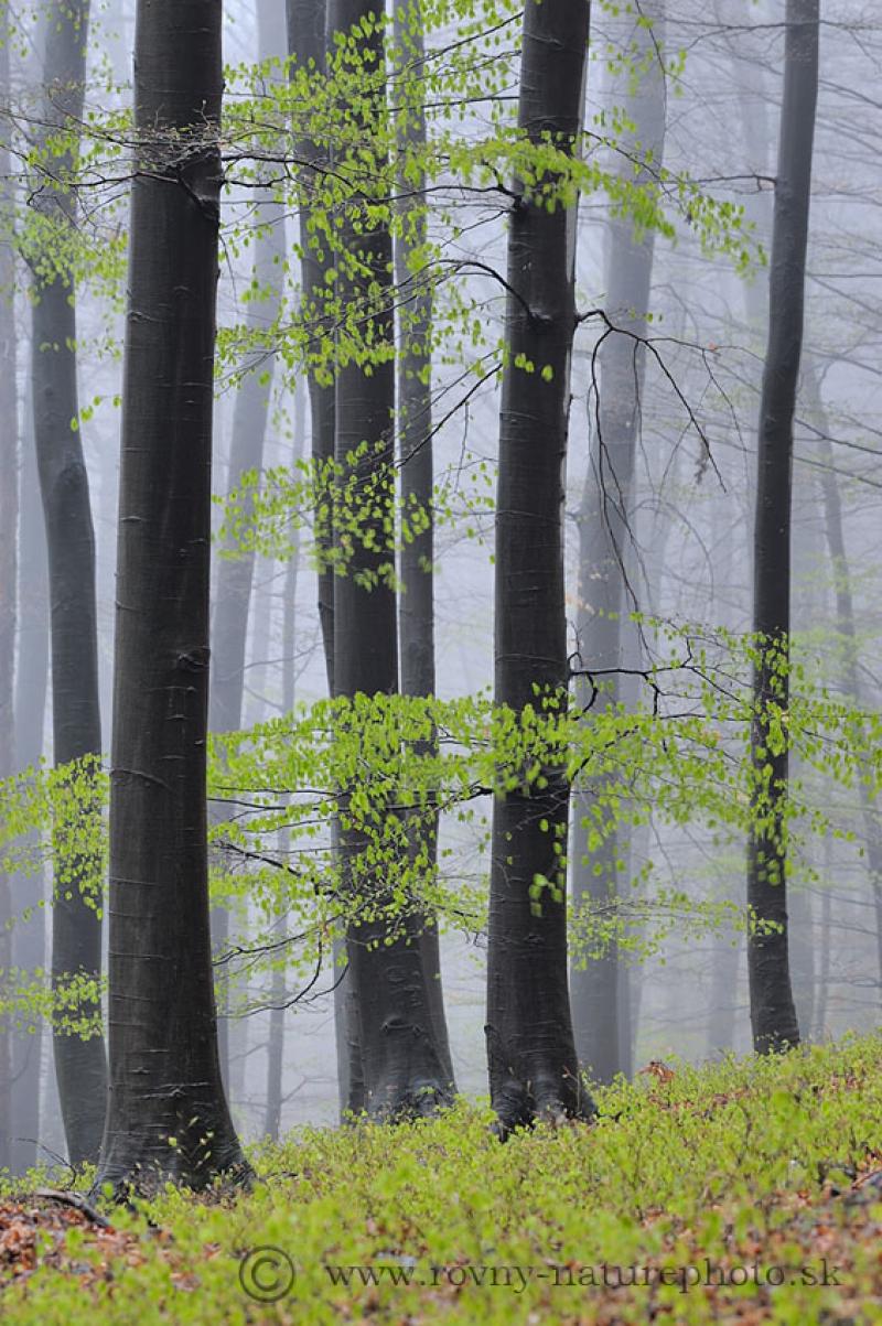 jesen_zima_jar_v_bucine4